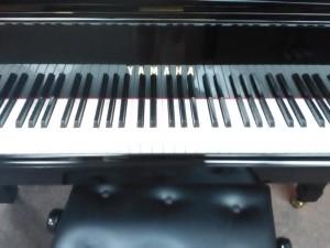 YamahaG5 6ft6in1